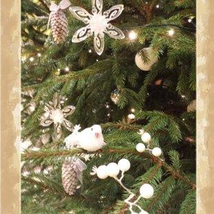 Eglītes stāsts - baltās ziemas meža pasaka